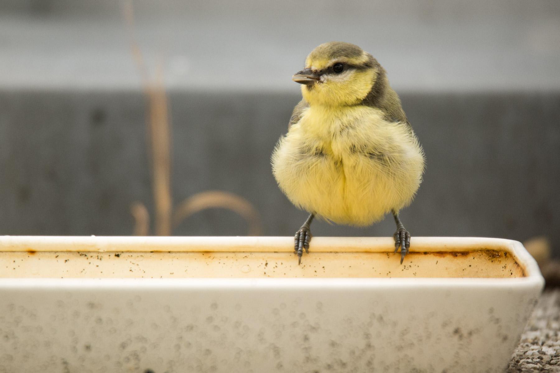 Vogeltränke - Naturschutz zum Mitmachen | Raus Jetzt ...